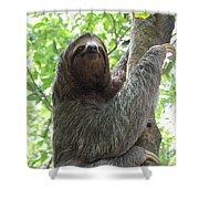 Three Toed Sloth  Shower Curtain