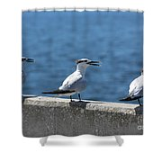 Three Turning Terns Shower Curtain