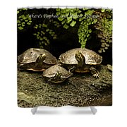Three Turtles Shower Curtain