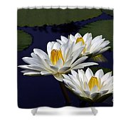 Three White Tropical Water Lilies Version 2 Shower Curtain