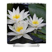 Three White Waterlilies Shower Curtain