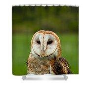 Three Wise Owls Shower Curtain