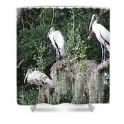 Three Wood Storks Shower Curtain