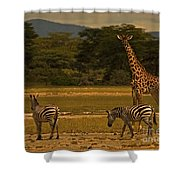 Three Zebras And A Giraffe Shower Curtain