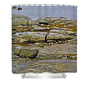Thrombolites Up Close In Flower's Cove-nl Shower Curtain