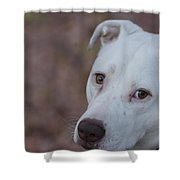 Through The Eyes Of A Pitbull  Shower Curtain