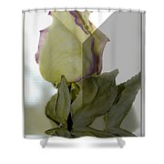 Through The Prism  A Rose Shower Curtain