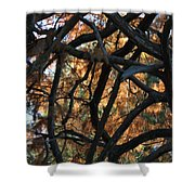 Through The Trees 2 Shower Curtain