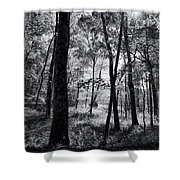 Through The Trees In Black And White Shower Curtain
