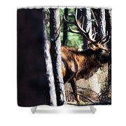 Thru The Trees Shower Curtain
