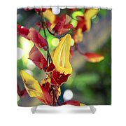 Thunbergia Mysorensis - Trumpetvine Shower Curtain