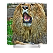 Thunder Vocals Of Lazy Boy At The Buffalo Zoo Shower Curtain