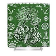 Thuroidea From Kunstformen Der Natur Shower Curtain