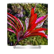 Red Ti Plant Shower Curtain