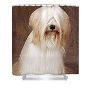 Tibetan Terrier Dog Shower Curtain