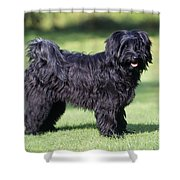Tibetan Terrier Dog Standing Shower Curtain