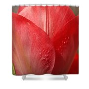 Tickle Me This Tulip Shower Curtain