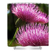 Tickled Thistle Shower Curtain