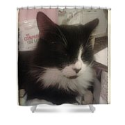Tiddle Shower Curtain