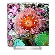 Tide Pool Creatures Shower Curtain