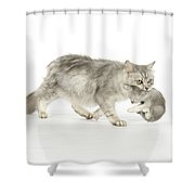 Tiffanie Cat And Kitten Shower Curtain
