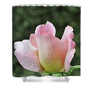 Tiffany Hybrid Rose Shower Curtain