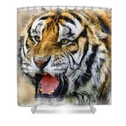 Tiger 006 Shower Curtain