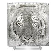 Tiger #1 Shower Curtain