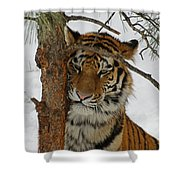 Tiger 2 Shower Curtain