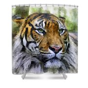 Tiger 26 Shower Curtain