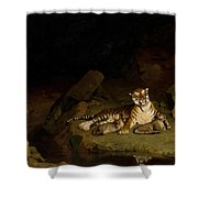 Tiger And Cubs Shower Curtain
