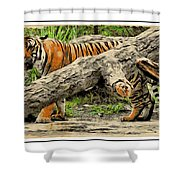 Tiger By The Log Shower Curtain