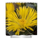 Tiger Claw Plant Shower Curtain