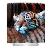 Tiger Cub Nap Shower Curtain