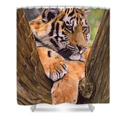 Tiger Cub Painting Shower Curtain by David Stribbling
