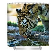 Tiger Drinking Water Shower Curtain