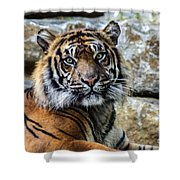 Tiger Facing The Crowd Shower Curtain