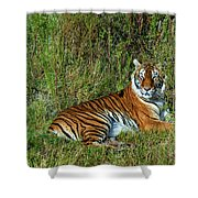 Tiger In The Grass Shower Curtain