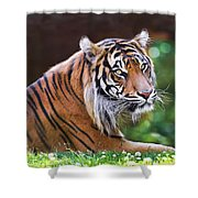 Tiger In The Sun Painting Shower Curtain
