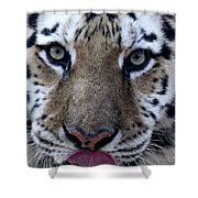 Tiger Lick Shower Curtain