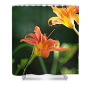 Tiger Lily And Bud   # Shower Curtain