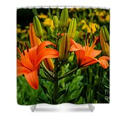 Tiger Lily Blossoms Shower Curtain