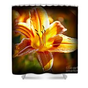 Tiger Lily Flower Shower Curtain