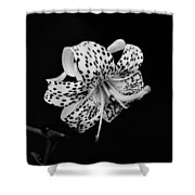 Tiger Lily In Black And White Shower Curtain