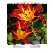 Tiger Lily0243 Shower Curtain