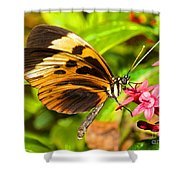 Tiger Mimic Butterfly Shower Curtain