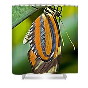 Tiger Mimic Queen Butterfly Shower Curtain