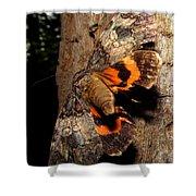 Tiger Moth Flight Shower Curtain