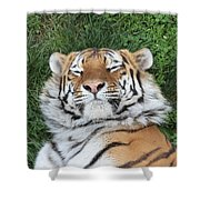 Tiger Nap Time Shower Curtain