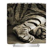 Tiger Paws Shower Curtain
